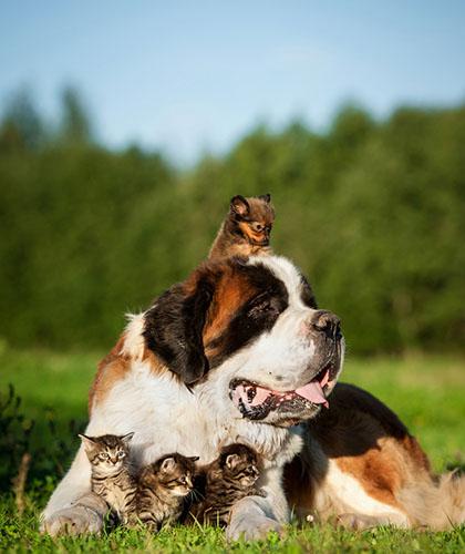 piensos-asociaciones-mascotas
