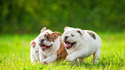 piensos-profesionales-perros